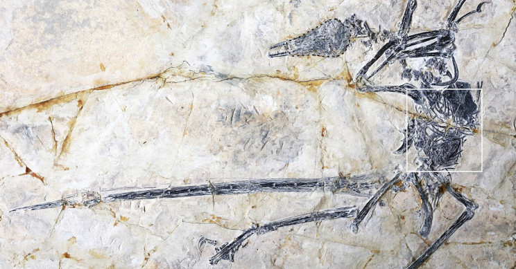 Fossil Inception: Fossil in a Fossil Unveils New Lizard Species