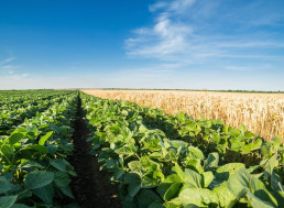 Organic Farming Actually Increases Greenhouse Gas Emissions, Study Finds