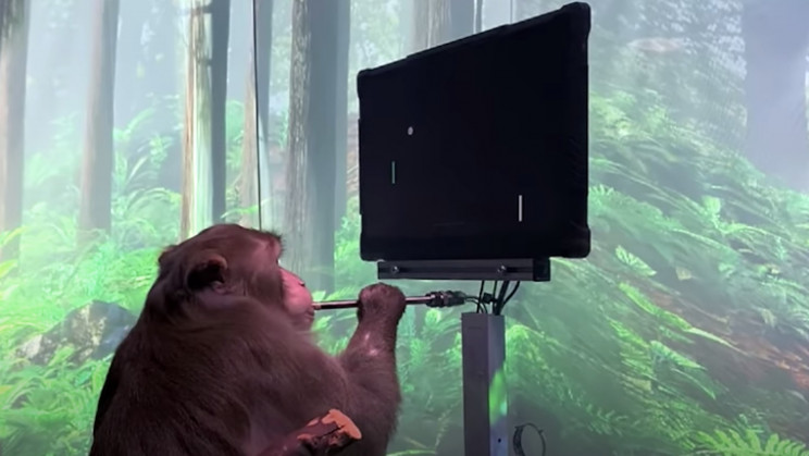 Watch a Monkey with Neuralink's Chip Play Pong With Its Mind