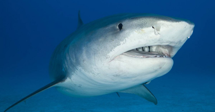 Shark That Killed Maui Surfer Identified by DNA from Its Mucus