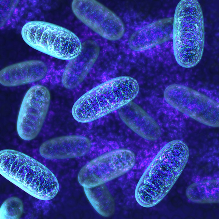 Turns Out Mitochondria Have an Unknown Function