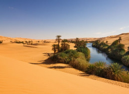 Fish Bones Scattered Across the Sahara Shed Light on the Desert's Past