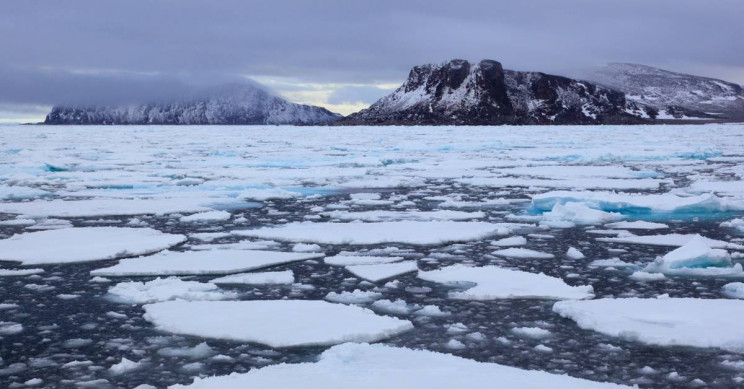 New Species of Chlamydia Bacteria Found in the Arctic Ocean