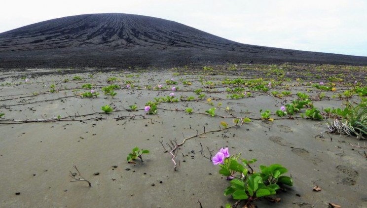 "Newly Formed Volcanic Islands Might Be ""The Cradle of Life"""