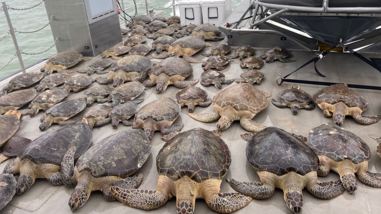SpaceX Joins Locals to Save Nearly 4,500 Sea Turtles From Cold in Texas