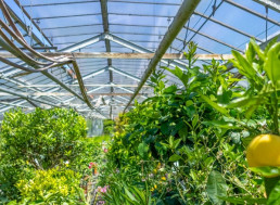 See-Through Solar Panels Could Turn Greenhouses into Energy Neutral Spaces