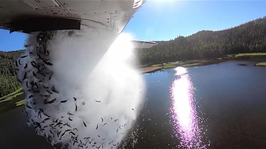 Watch Wildlife Department Air-Drop Thousands of Fish in Utah Lakes