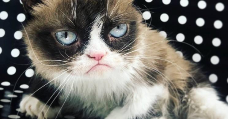 Internet Legend Grumpy Cat, AKA Tardar Sauce, Dead at Age 7