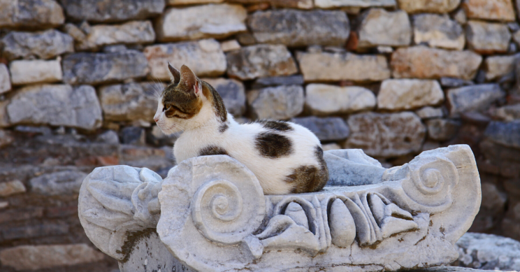 Cats' Eating Habits Indicate They've Been Domestic Since Late Neolithic