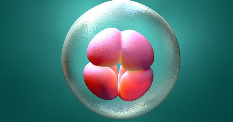 Researchers Generate 3D Blastocyst from the Stem Cells of Mice