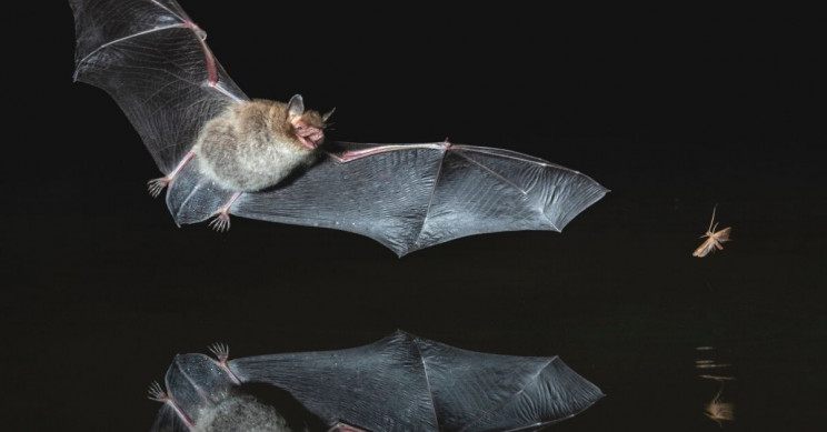 Research Reveals Bats Can See Into the Future
