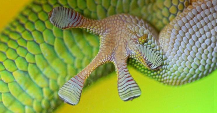 Patrick Gijsbers Gecko Feet