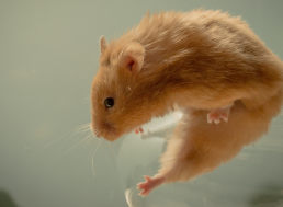 Animal Testing: A Needless Cruelty or a Necessary Evil?