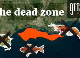 Fertilizer Pollution Problem Is Destroying the Gulf of Mexico