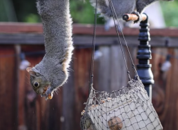 Ex-NASA Engineer Builds Obstacle Course to Keep Squirrels Away from His Nuts