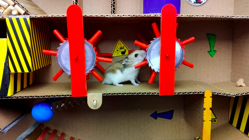 Owner Builds Intricate Maze for Pet Hamster from Cardboard