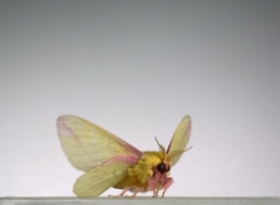 This Super-Slo-Mo Video of Insects Flying Will Leave You in Awe