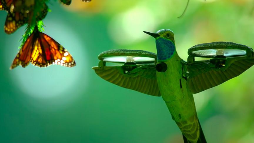 Robot Hummingbird Captures Half a Billion Butterflies Taking Flight