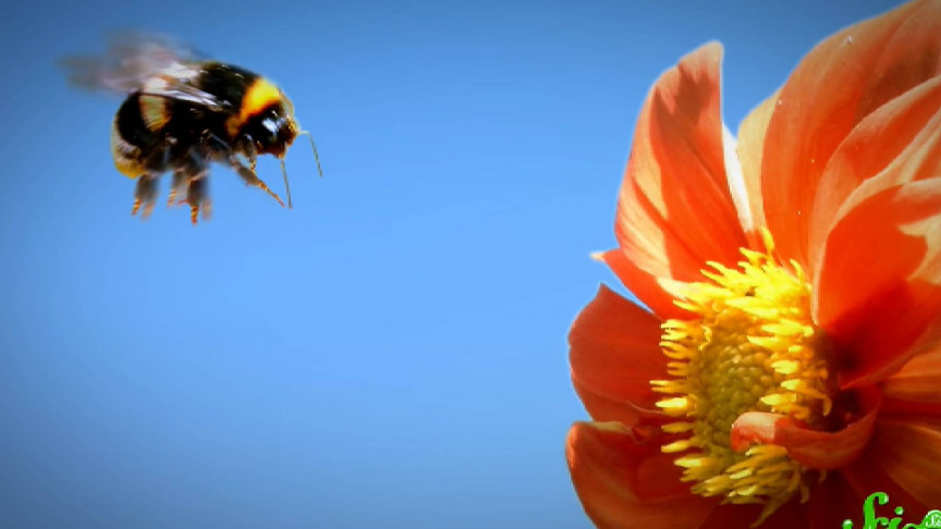 Why Do Bees Just Keep Staring at Flowers After Feeding on Them?
