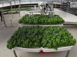 These Water-Saving Robots Are Growing Produce in Greenhouses