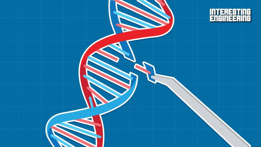 How CRISPR Gene Editing Is Ushering In a Brave New World