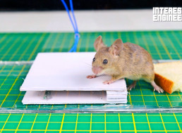 Make Your Own Humane Mouse Trap from Simple Materials