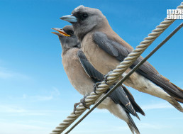 The Reason Why Birds Sitting on Power Lines Don't Get Electrocuted