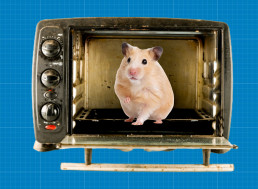 Scientists Used Microwave Ovens to Reanimate Frozen Hamsters in 1950s