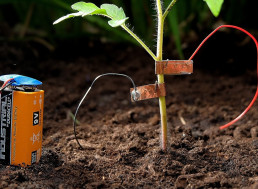 Keep Snails Away From Plants With a 9V Battery and Copper Tape