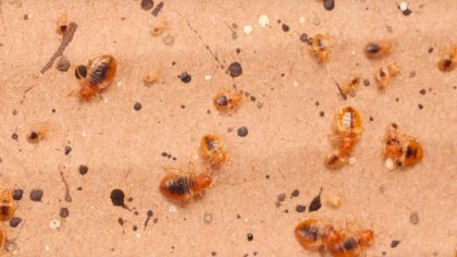 Watch This Easy Way to Block Bed Bugs from Reaching Your Bed