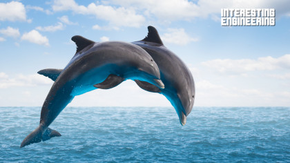 How Dolphins Use Echolocation to Master the Dark and Mysterious Deep Seas