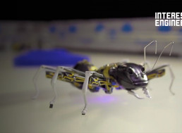 Animal and Insect Robots That Behave Like the Real Things