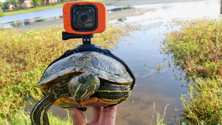 Turtle Strapped With a GoPro Documents Endearing Underwater Life
