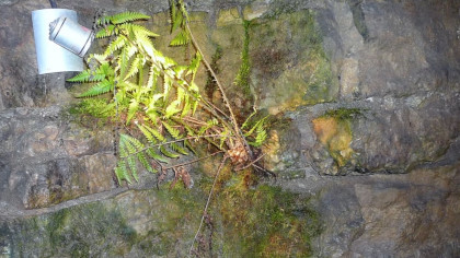 Why Plants in Caves Are Bad for Everyone Involved